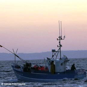 Rencontre avec les pêcheurs de sardine enBretagne