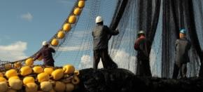 Dans les coulisses de la plus grande pêcherie de thon durable dumonde