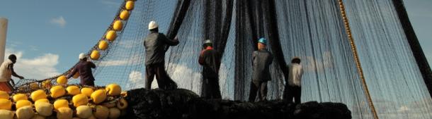 Pêcheurs de thon des PNA remontant les filets à bord. © Maarten van Rouveroy / www.atuna.com